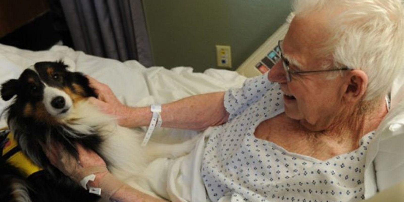 Es por eso que después de unos poco minutos juntos, los pacientes se relajan. Foto:zacharyspawsforhealing.com/