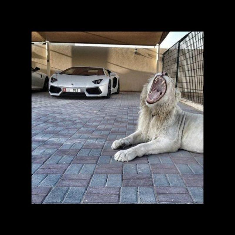 La posesión de animales exóticos Foto:instagram.com/richkidslondon/