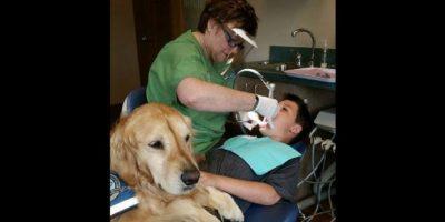 Un beneficio adicional del trabajo de Jojo es que, debido a que no se necesitan calmantes, los costos de los procedimientos disminuyen. Foto:facebook.com/kidsddsnbk