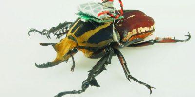 OMG !: Escarabajos gigantes a control remoto para reemplazar a los drones