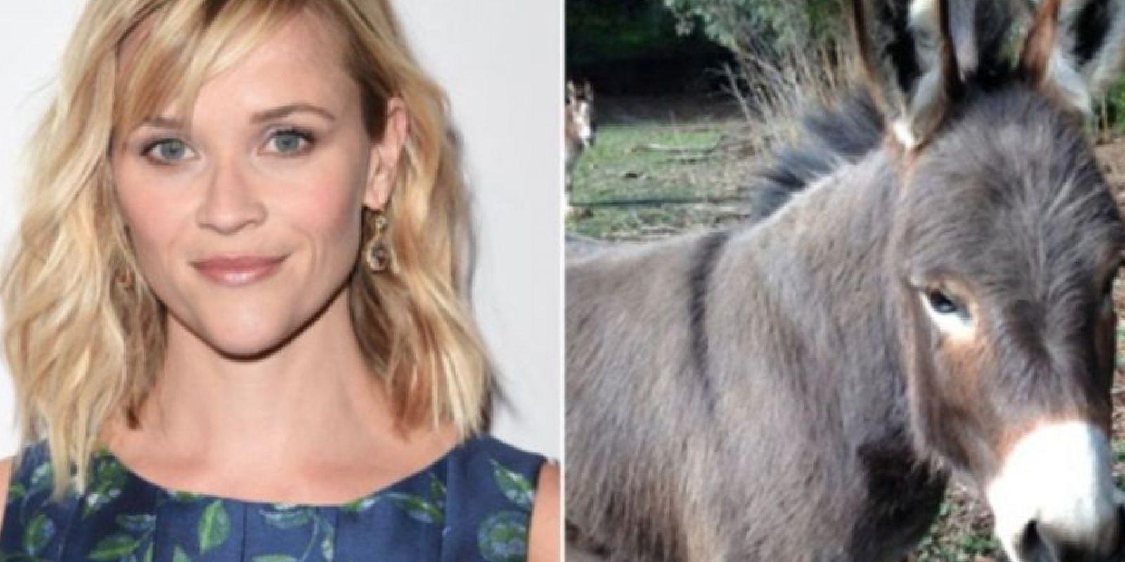Reese Witherspoon tiene dos bullos, dos cerdos, gallinas, tres perros, cabras y un pony. Foto:Vía Instagram
