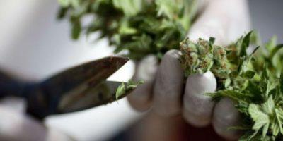 3. Se alega que los jóvenes se encontraron un mapa de un supuesto cultivo de marihuana. Foto:Getty Images