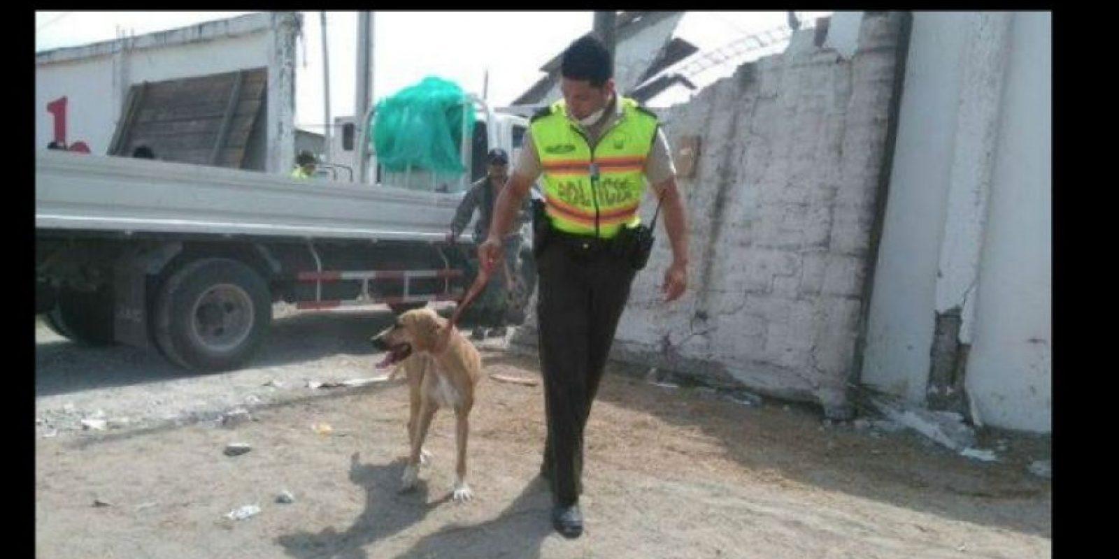 Durante sus esfuerzos no solo ayudan a las personas. Foto:facebook.com/policia.ecuador