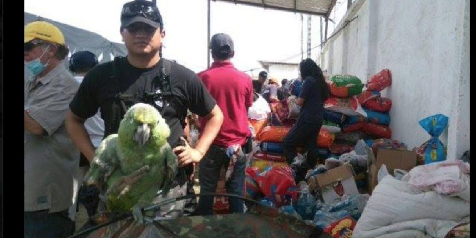 Cada vez que encuentran alguno ven la manera de brindar ayuda sin importar tamaño o raza. Foto:facebook.com/policia.ecuador