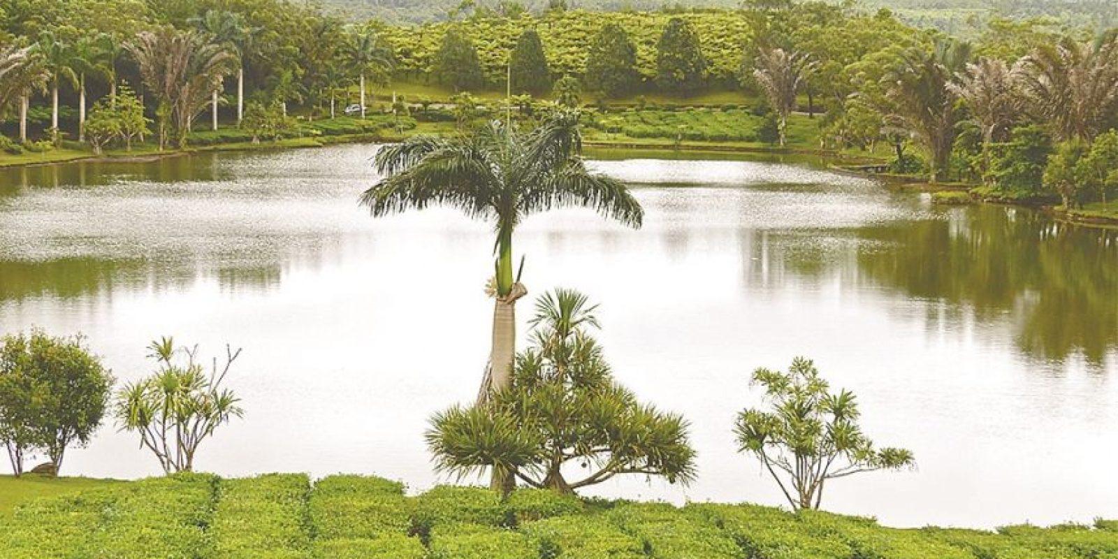 """7- En Isla Mauricio mitigan los daños. Tras la independencia de esta isla en 1968, el rápido desarrollo industrial provocó graves daños al medioambiente. Sin embargo, para recuperar la fama de paraíso terrenal que habían perdido, el Gobierno ideó el proyecto Mauricio Isla Sostenible, iniciativa introducida para construir un """"país verde"""". El plan busca reinventar un nuevo estilo de vida dirigido al reciclaje y producción de energía renovable. Por eso ocupa el primer lugar en la región de África subsahariana."""
