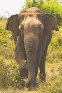 8- Sri Lanka se inserta en el tema ambiental. Si la lista mundial no fuera dividida por región, este país ocuparía el puesto número 108. Sin embargo, se coloca al tope de la región de Asia Central porque en 2015 se convirtió en la primera nación del mundo en comprometerse a proteger todos sus bosques de manglares, para lo que ha diseñado un programa cuyo objetivo consiste en proteger los 21,782 acres (8,815 hectáreas) de bosques de manglares existentes en el país. Se estima que en los últimos 100 años, más de la mitad de los manglares del mundo se ha perdido y siguen siendo destruidos a un ritmo de alrededor de 1 % al año.