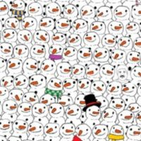 Busquen al panda. Foto:Vía Twitter.com