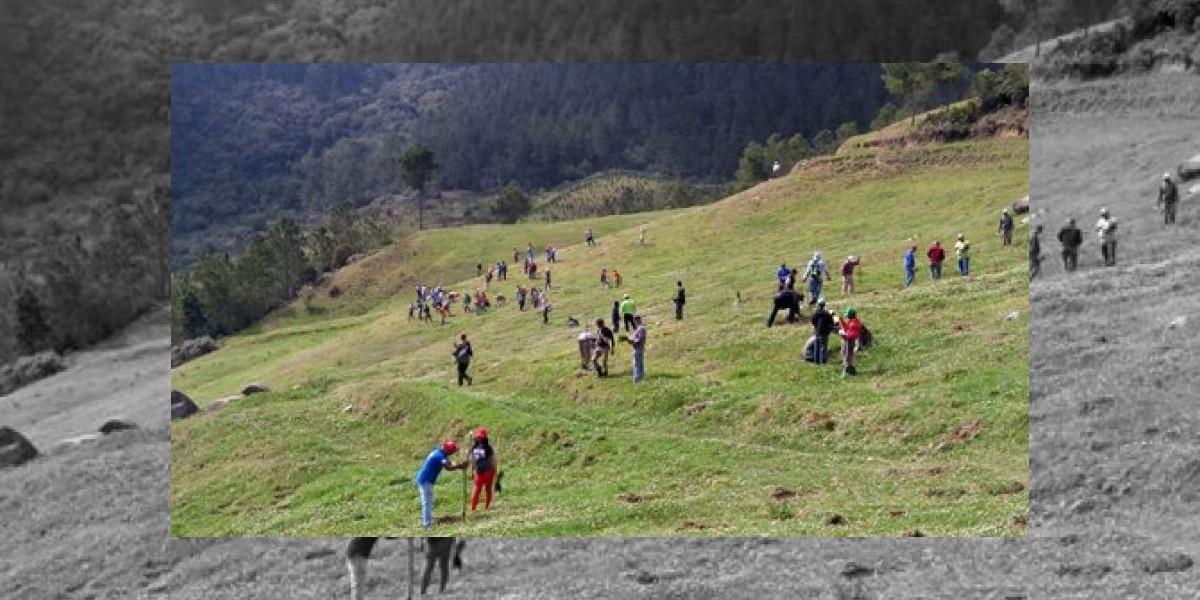 Medio Ambiente inicia plan siembra árboles en zonas afectadas en Valle Nuevo