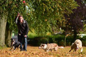 ¿Qué tener en cuenta antes de adoptar un perro? Foto:Getty Images