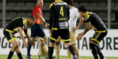 1. Este perro se robó el show durante el Táchira vs. Pumas de la Copa Libertadores. Foto:AP