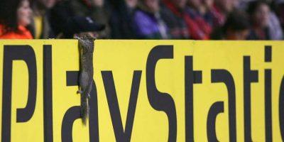 7. En 2006, otra ardilla se robó el show al meterse a la cancha durante el Arsenal vs. Villarreal de semifinales de Champions League. Foto:Getty Images