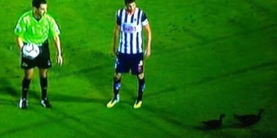 2. En 2013, varios patos entraron a la cancha del Tecnológico de Monterrey durante un juego entre Rayados y Monarcas. Foto:Vía twitter.com
