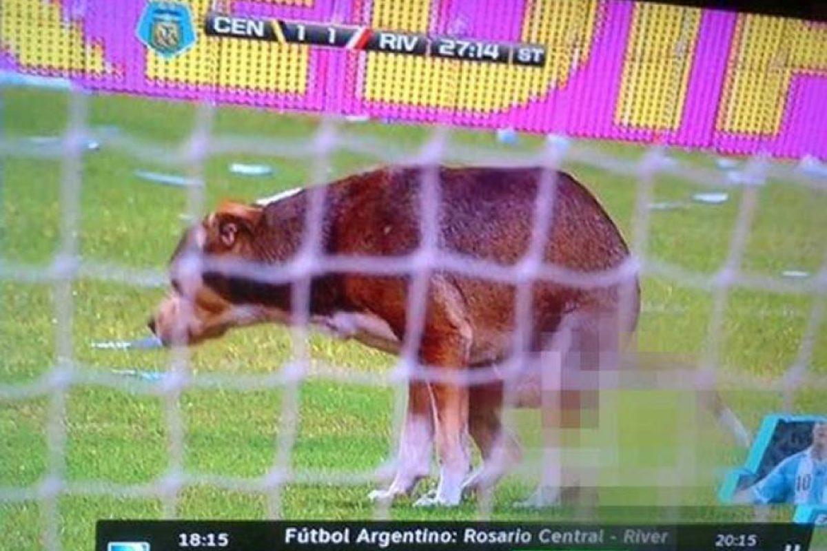 Se metió al césped del estadio de Rosario Central, durante un partido ante River Plate… ¡y defecó en él! Foto:Vía twitter.com