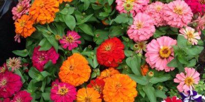 Un jardín de flores para las madres