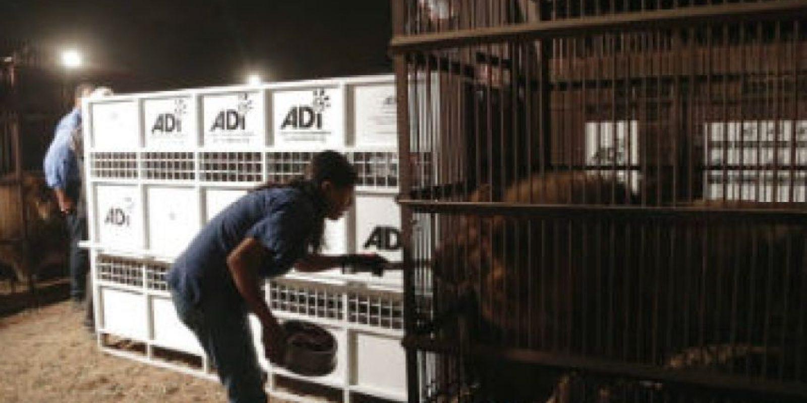 Además de sufrir desnutrición y estrés por el encierro. Foto:facebook.com/AnimalDefenders