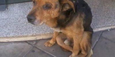 Abandonan a perro en autobús y su tristeza se hace viral
