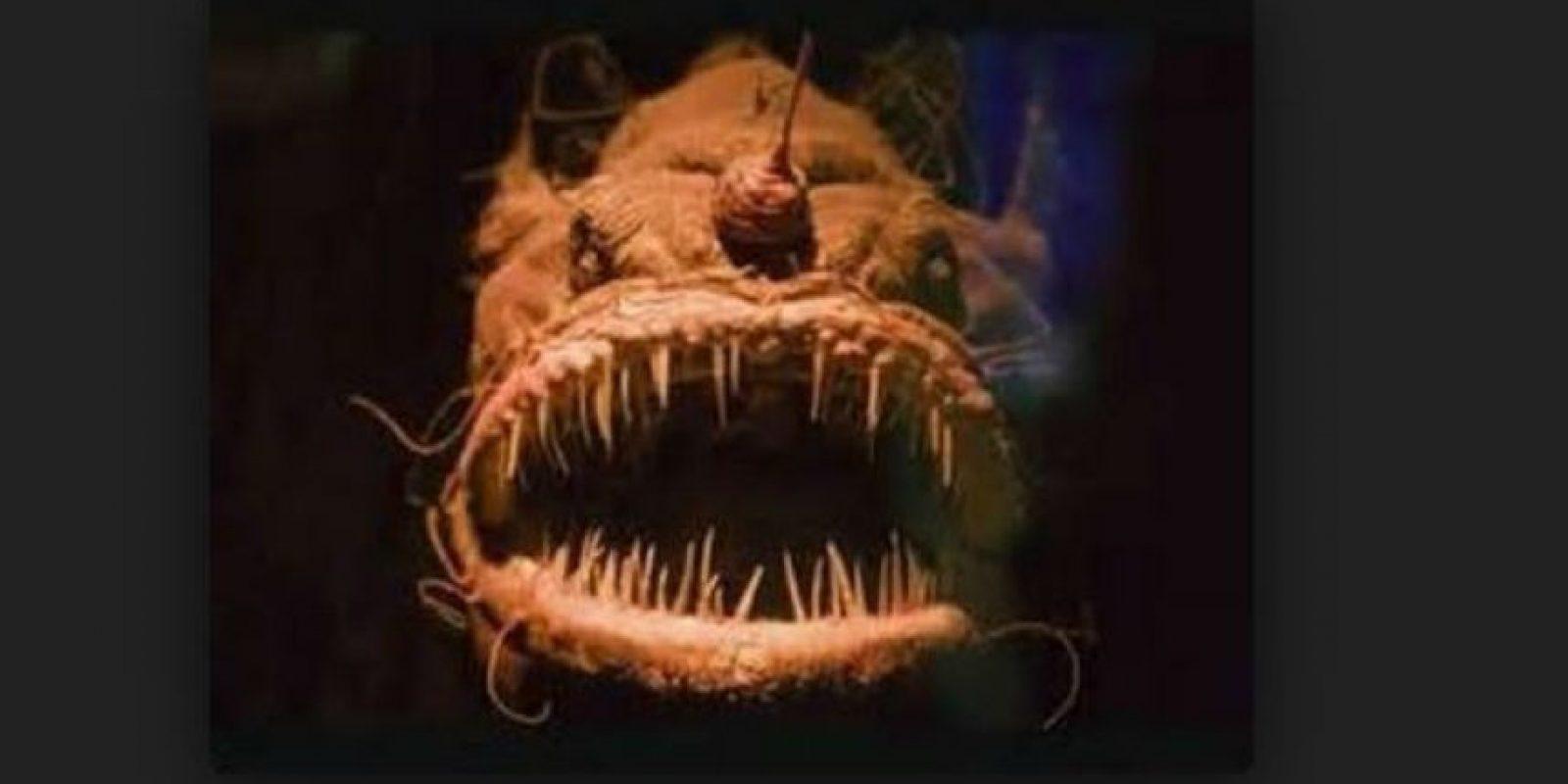 En el lugar habitan distintas especies desconocidas. Foto:Youtube.com