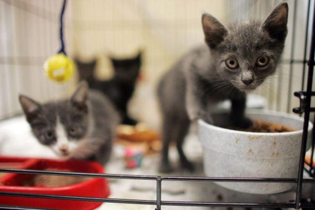 Lo primero es dar a los gatitos un espacio cerrado, bien abrigado, ventilado pero protegido de las corrientes de aire. Foto:Getty Images