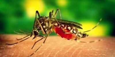 Se han presentado 181 casos de zika en Haina, según Padesha