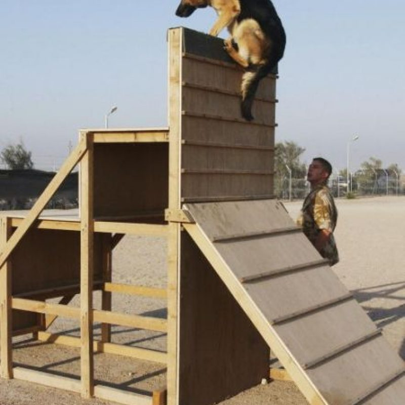Datos que deben saber sobre los perros policías Foto:Getty Images