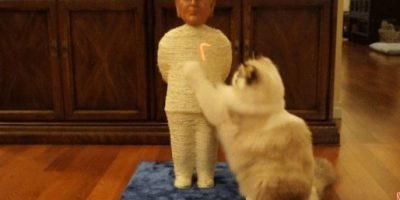 Los gatos ya pueden poner sus garras en Trump