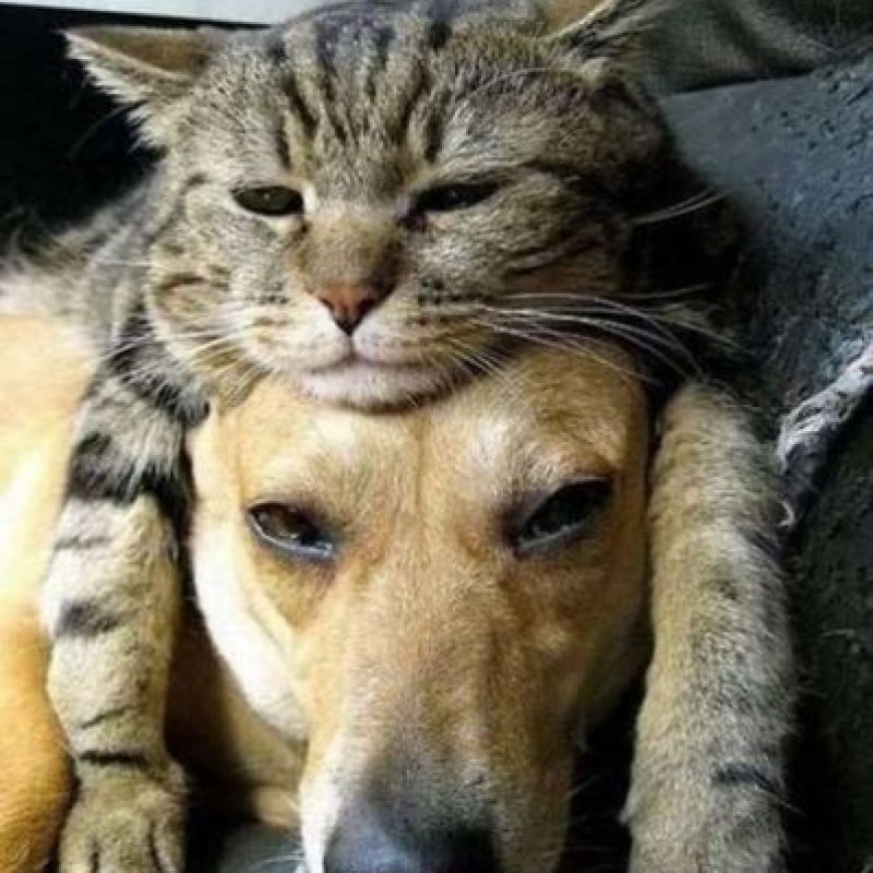 Así como sus parientes salvajes, los gatos son cazadores, particularmente eficaces de noche, por su buena visión e oído. Foto:Vía Pinterest