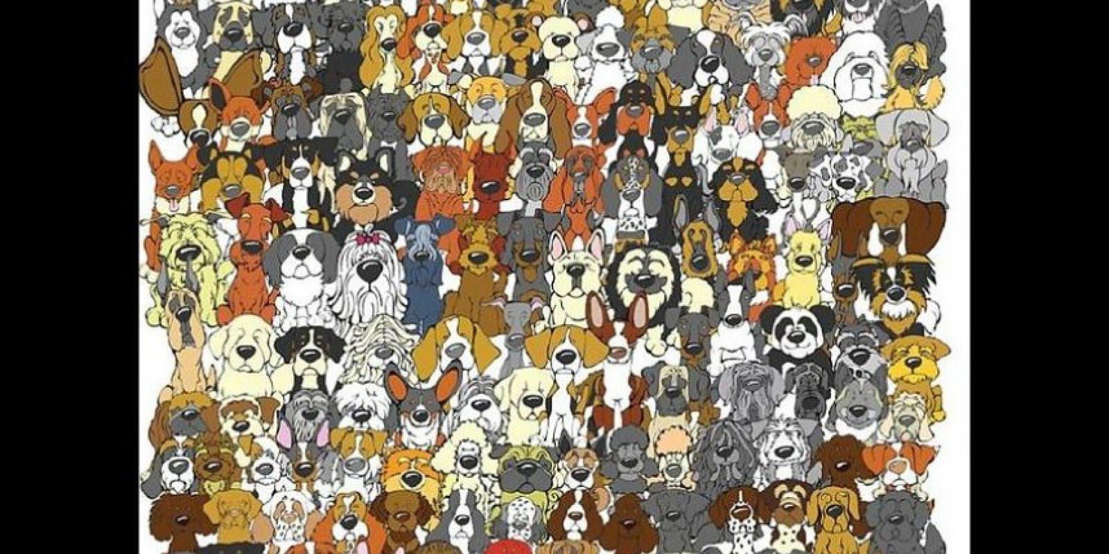¿Dónde está el panda? Foto:Playbuzz