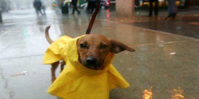 Perro escapa de su casa para ir solo a la guardería canina