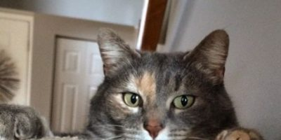 Facebook: No consigue a nadie para la graduación y lleva a su gata