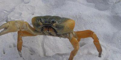 El caracol dorado de agua dulce ha sido una de las víctimas. Foto:tripadvisor.com