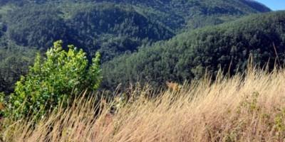 Medio Ambiente incorporará 5,000 tareas al Parque Sierra Bahoruco