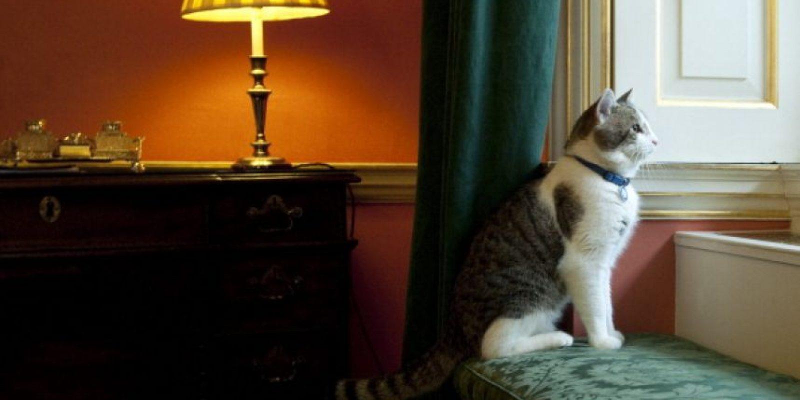 """La mayoría del contenido que los usuarios ven sobre gatos es """"cruzado"""" Foto:Getty Images"""
