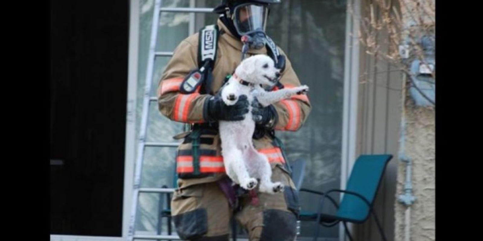 Situaciones poco comunes con la que bomberos del mundo han tenido que lidiar Foto:Facebook.com/ProvidenceVFC29/?fref=photo