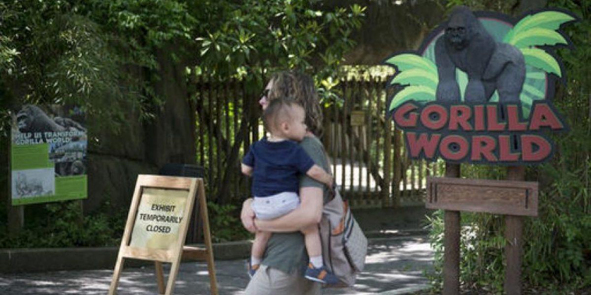 Padres del niño que cayó en jaula de gorila son investigados