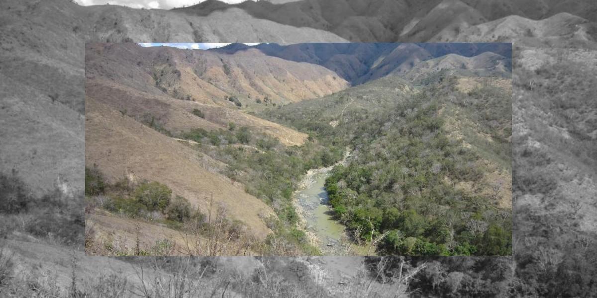 Siembran tres mil árboles en frontera dominico-haitiana