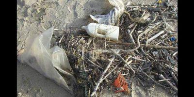 Provocando graves consecuencias en la flora y fauna marina. Foto:Pixabay