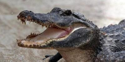 El ataque de un caimán a un niño sacude nuevamente a Orlando