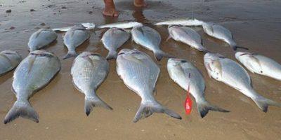 Hieren de bala a pescador dominicano en Bahamas