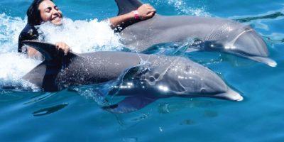 Un verano de aventura y diversión en Ocean World