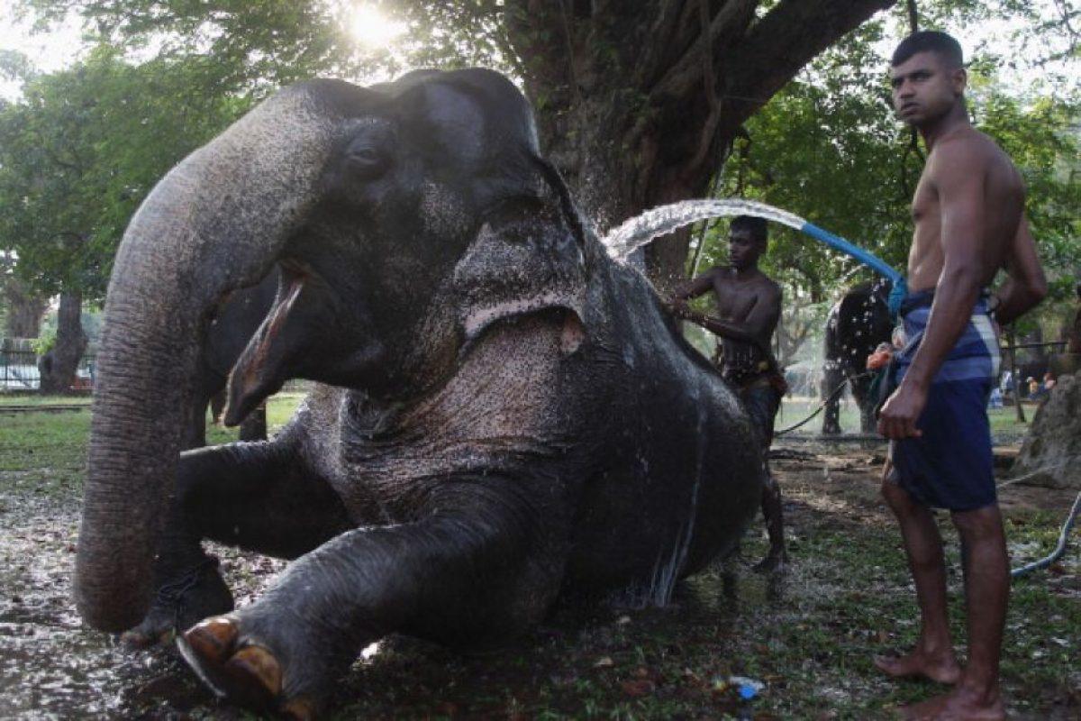 ¿Qué amenaza a los elefantes? Foto:Getty Images