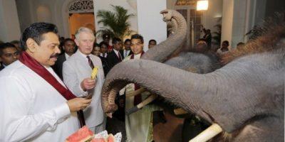 Además de la amenaza a su hábitat natural Foto:Getty Images