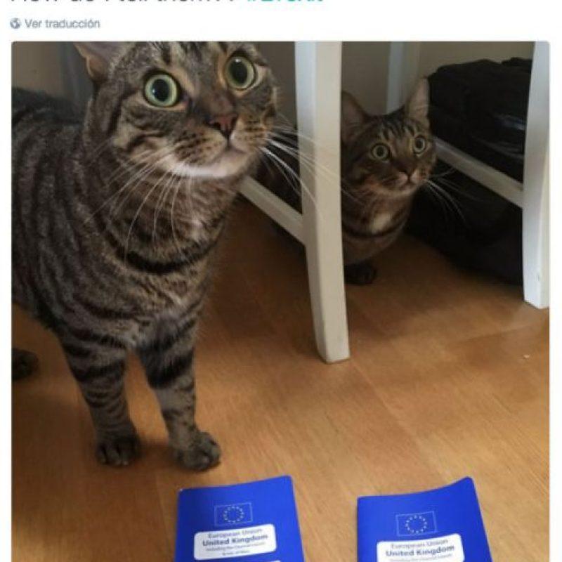 """""""¿Cómo se los digo?"""" Ambos gatitos tienen frente a ellos sus pasaportes de mascotas de la Unión Europea. Foto:Twitter/James Offer"""