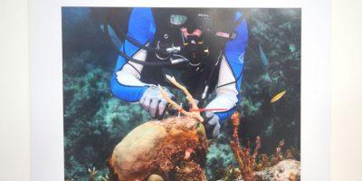 Nuestros océanos: Una riqueza amenazada, vista por Guillermo Ricart
