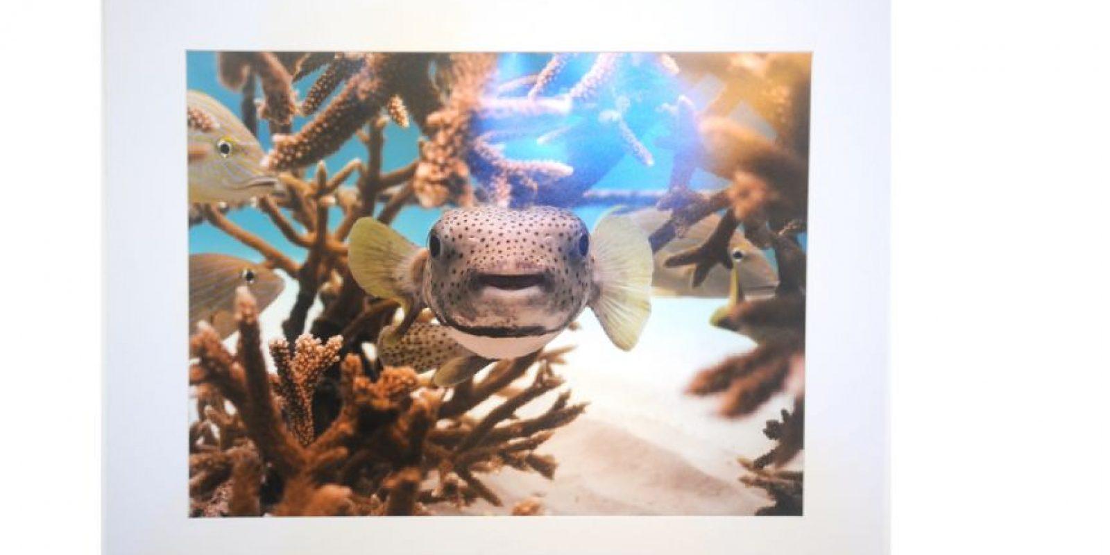 A través de estas fotografías, Guillermo Ricart muestra la riqueza y la amenaza de nuestros océanos. Foto:Fuente Externa