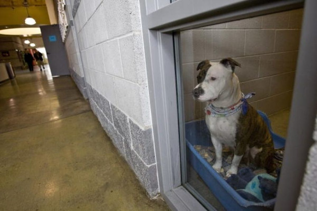Explica que hay que evitar que el niño agobie al perro y este termine mordiéndolo Foto:Getty Images
