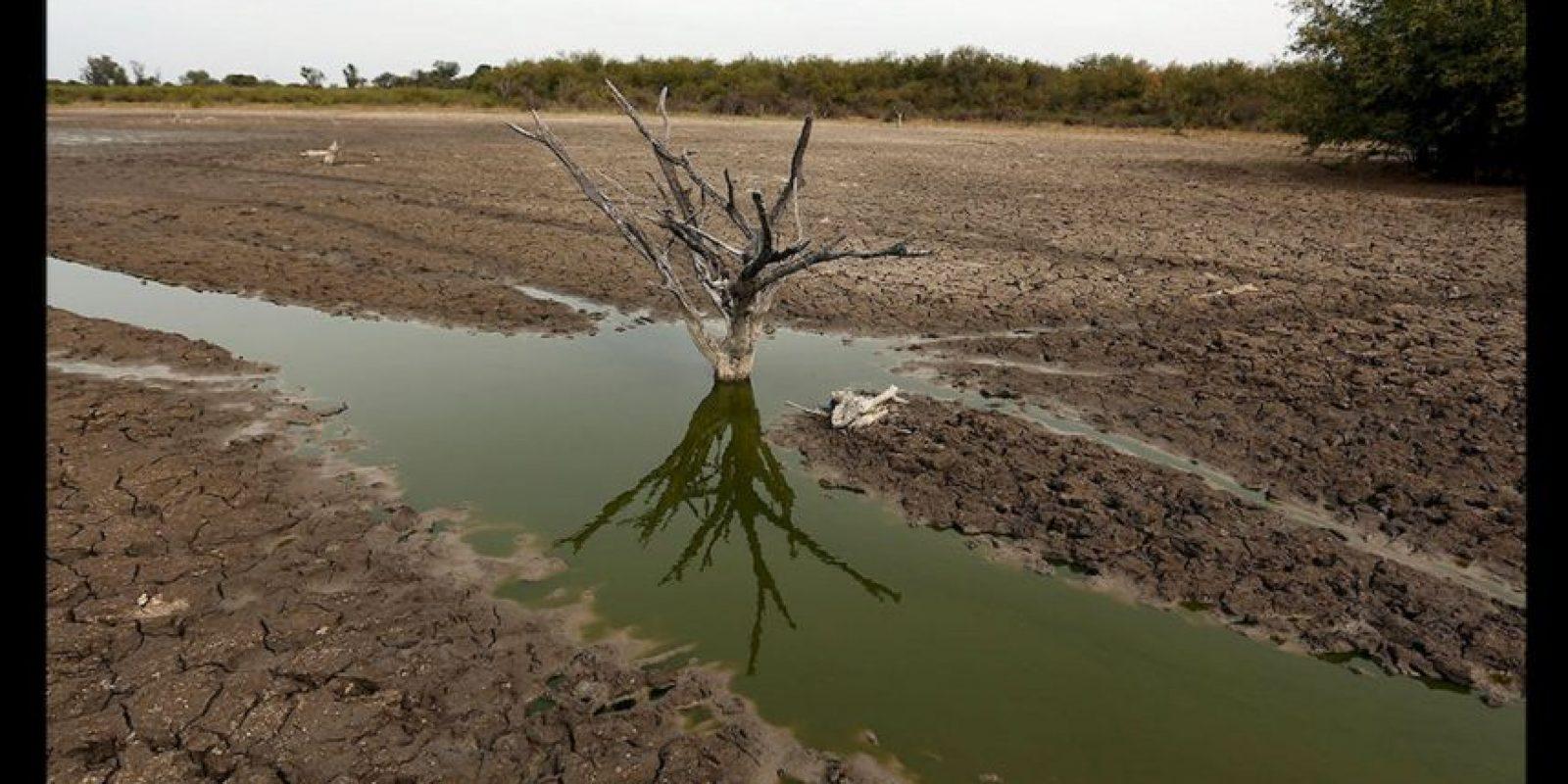 Ahora solo quedan parches de agua donde los animales agonizan y luchan por su vida. Foto:AP