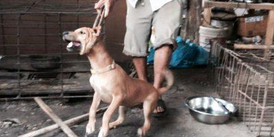 Muchos de ellos son ahorcados en el momento Foto:The Animal Hope & Wellness Foundation