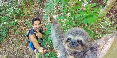 Oso perezoso posa para un selfie y se viraliza en Internet