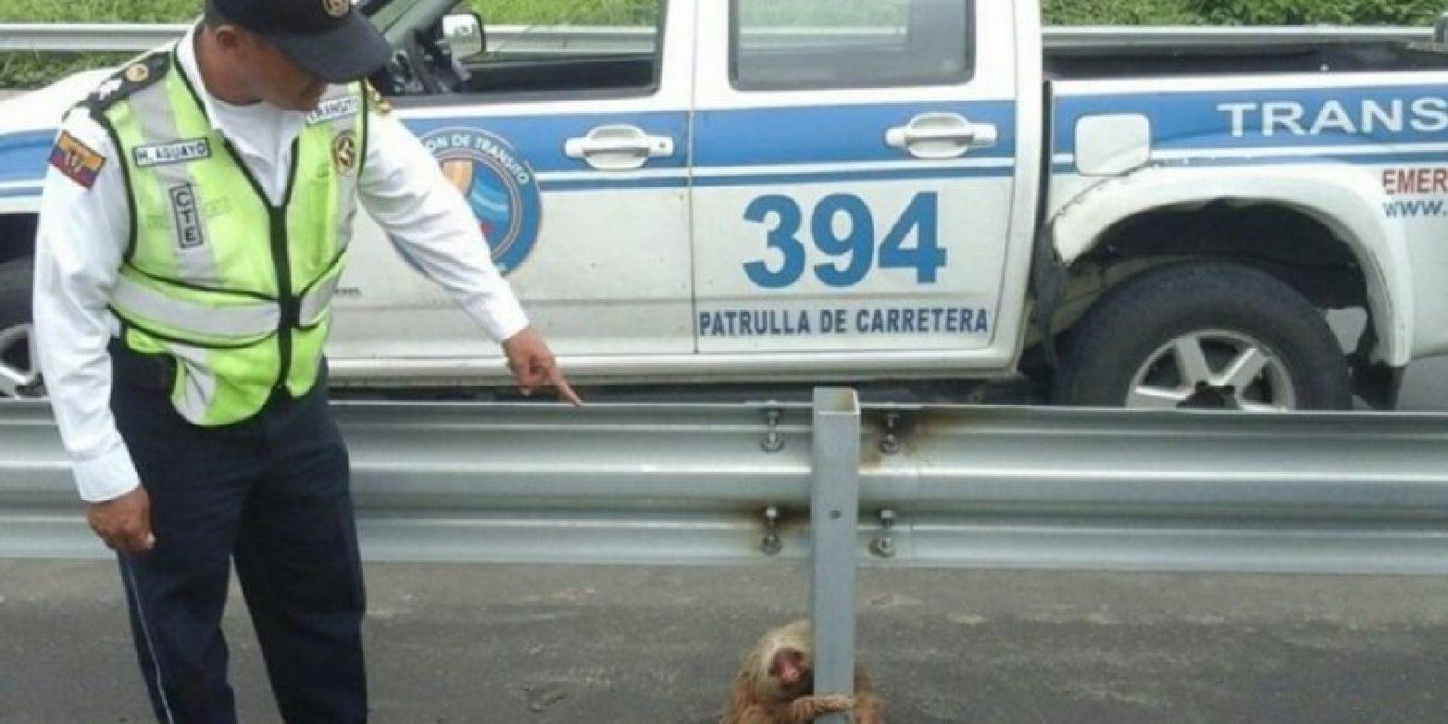 Hasta que llegaron agentes de la Comisión de Tránsito a brindarle auxilio Foto:facebook.com/ctecuador