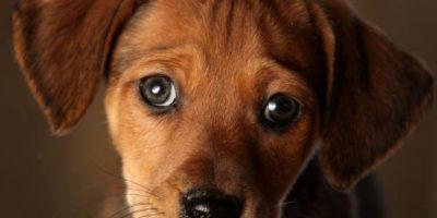 Cachorro aprendió lenguaje de señas para jugar con una niña sorda